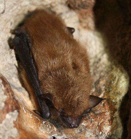 maine bat eviction wants to thank the U.S. Fish and Wildlife Service Headquarters, Public domain, via Wikimedia Commons